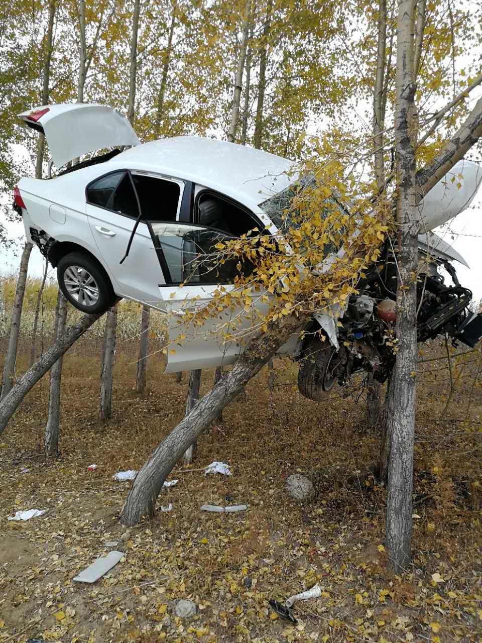 """一轿车竟开启了""""飞行模式"""" 开上了树"""