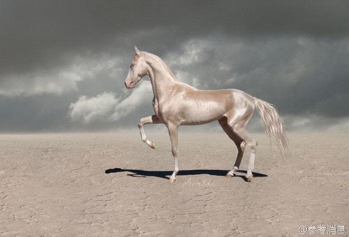 """""""来自天堂的马"""",全身闪金光"""