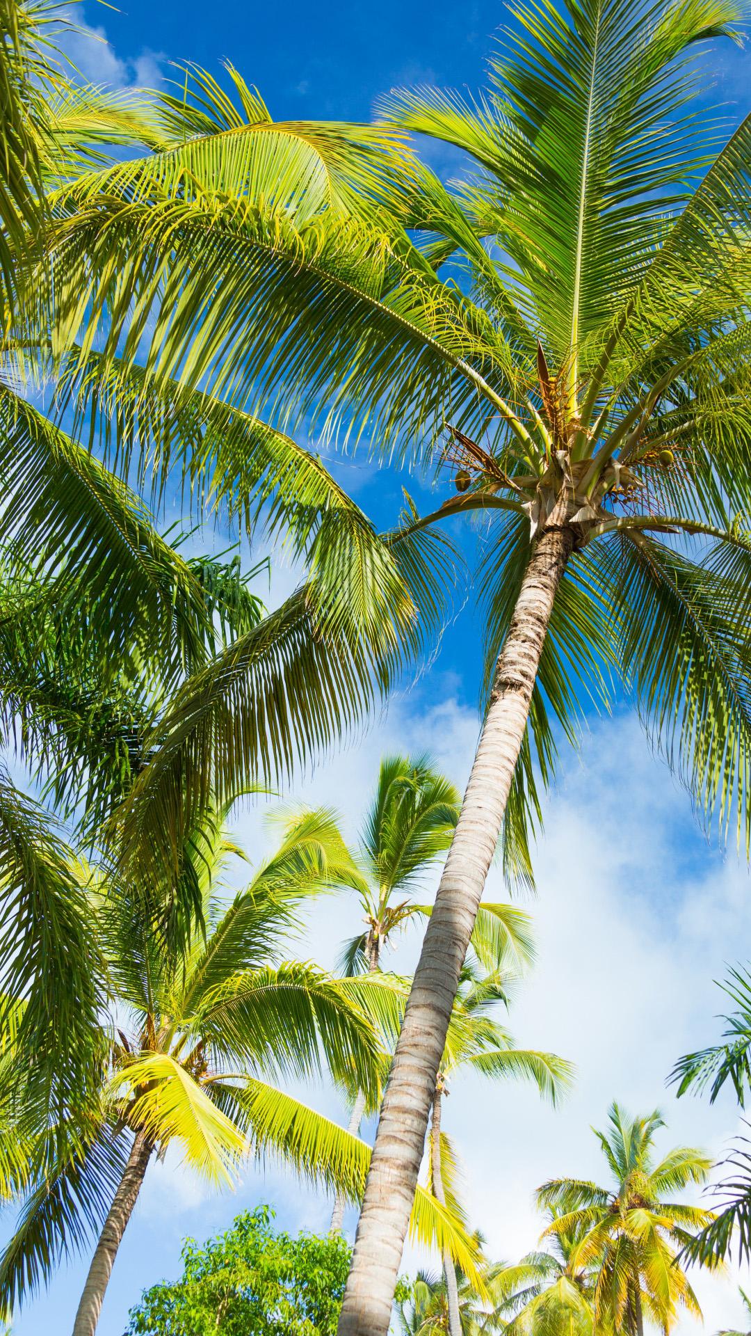 夏日椰子树风景高清图片手机壁纸