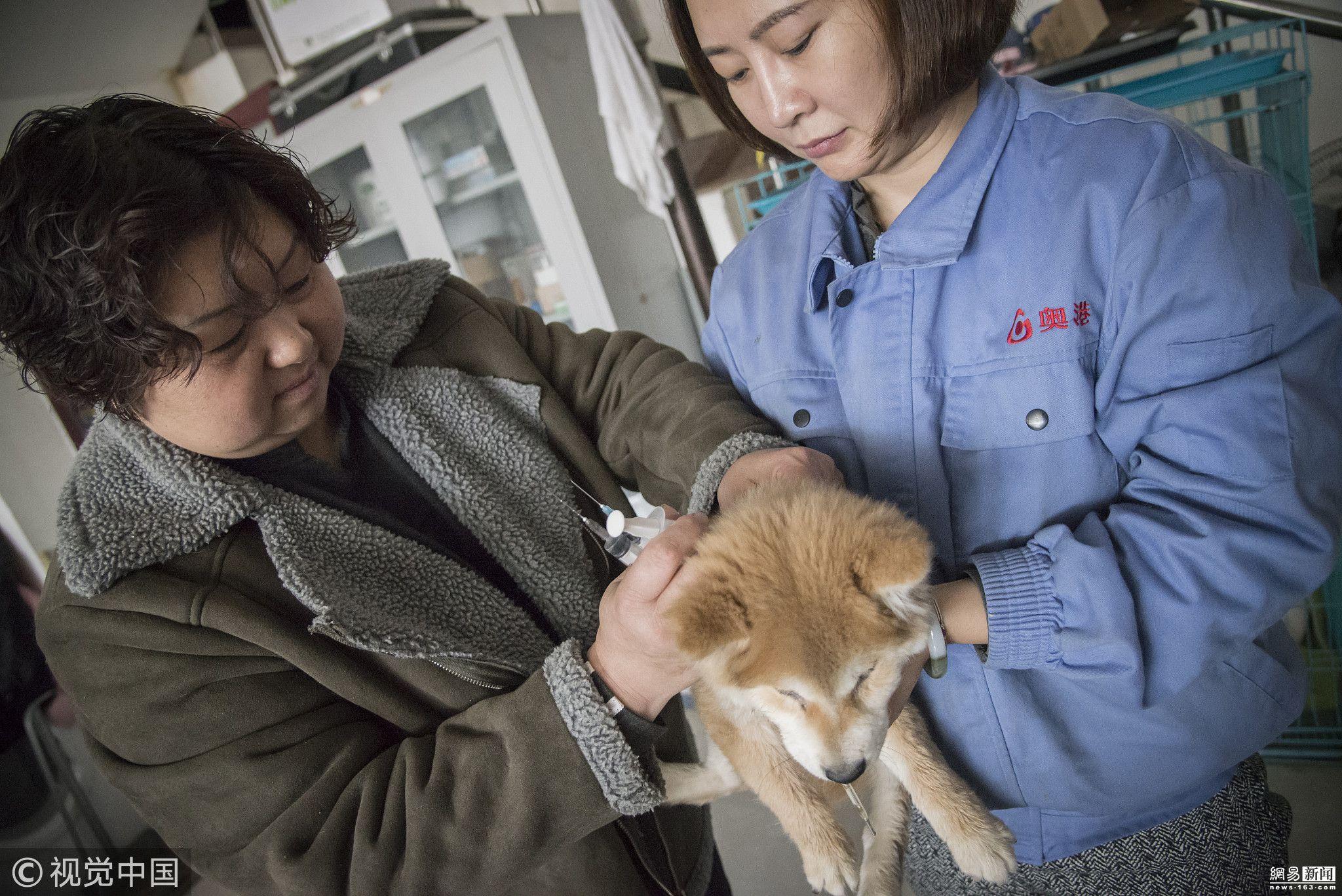 天津大姐20年卖三套房救上万流浪狗