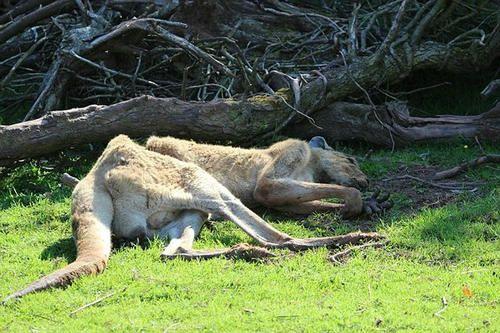 3年养死500动物 花豹饥饿难忍啃食自己爪子 动物园景象惨不忍睹