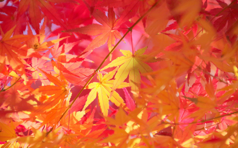 秋季唯美黄叶桌面壁纸_秋季唯美落叶壁纸_风景桌面_吧