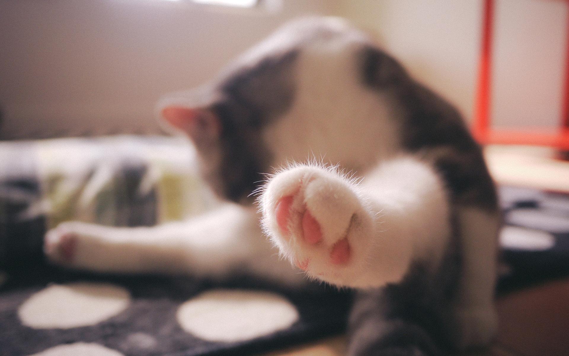 可爱猫咪高清图片桌面壁纸合集2