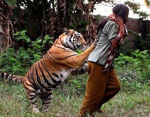 女子养老虎当宠物,本以为很威风没想到最后结局这样