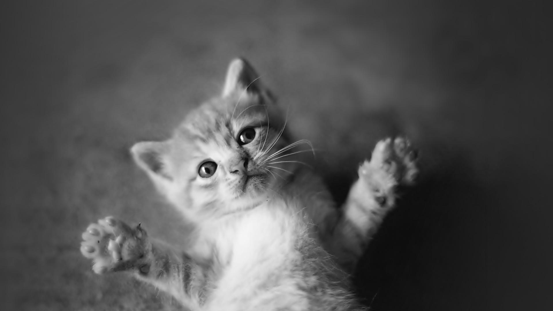 可爱猫咪与狗狗壁纸图片大全