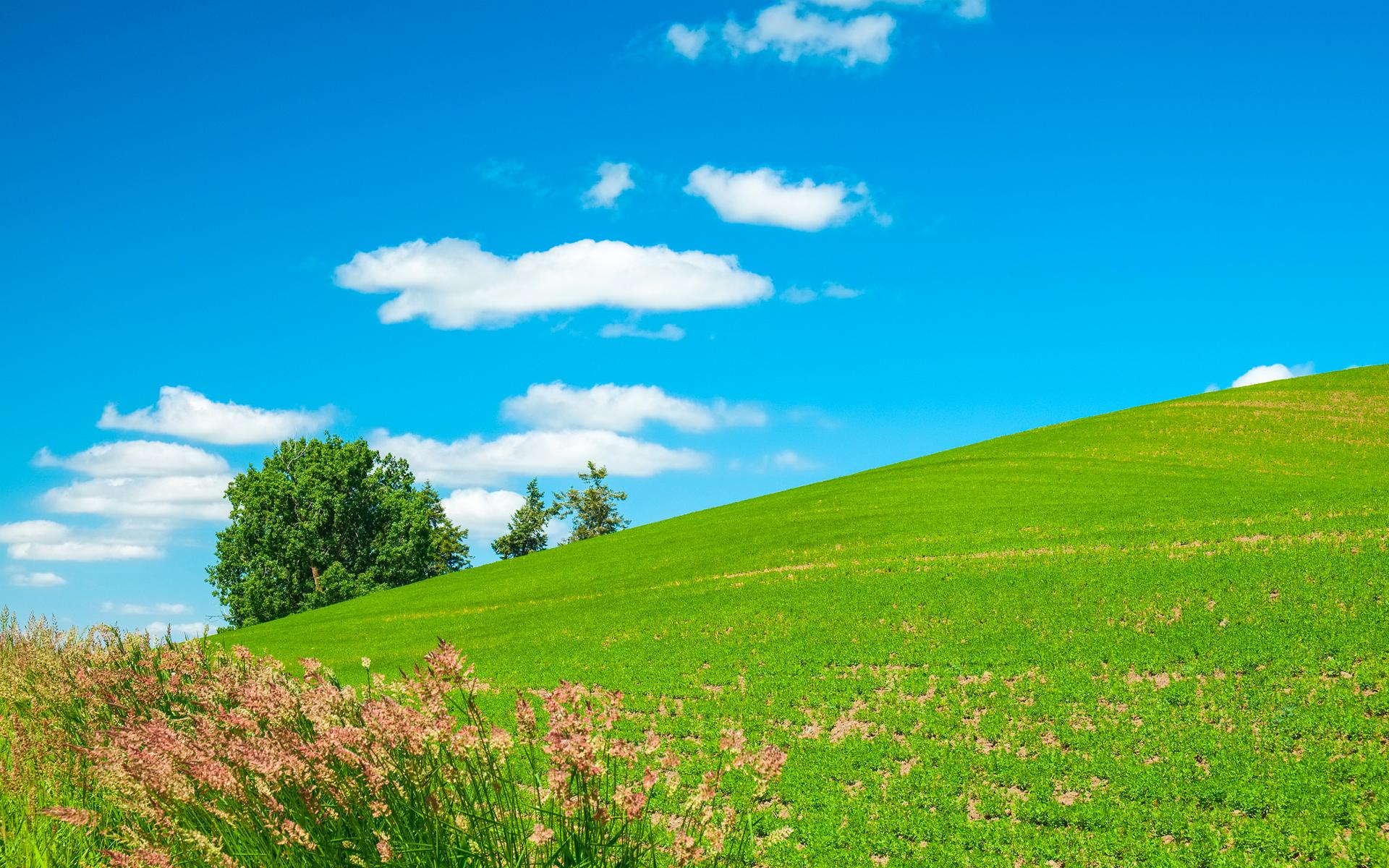 清新绿色草原蓝天碧草风景壁纸